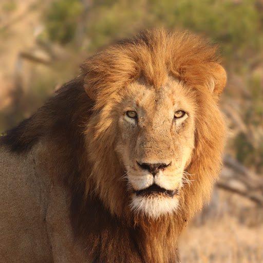 Big On Wild - Wildlife Videos